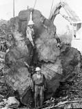 3. Big Cedar