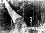 1957- Spruce Faller
