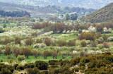landscape in spring around Tegea