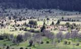 Landscape in Greece0025.jpg
