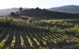 vineyards around Nemea