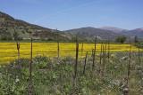 Landscape in Greece0037.jpg