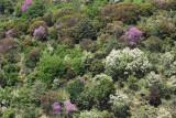 Landscape in Greece0060.jpg