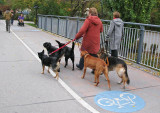 5 dogs walking the lady