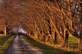 Country Road in Late Autumn