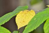 ... yellow