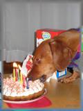 Maxs 6th Birthday