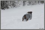 climbing in a snow...