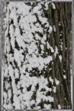 snow on trunk