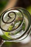 Jardin dans une bulle_Garden in a bubble