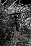 Vieille bicyclette dans le jardin_Old bicycle in the garden