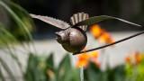 Oiseau de fer_Iron bird