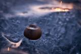 Petit molusque emprisonné dans la glace