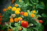...I saw nice flowers