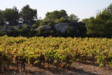 in the vines...