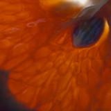 February # 12 : Tangerine Dream (lensbaby)