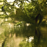 February 25 Fennel Reflections