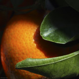 February 26  Clementine Light and Shadow  CW 98