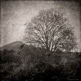 March 11 : Tree