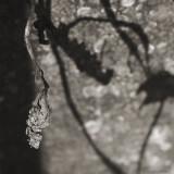March 13 : Shadows