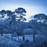 March 22 : blues (cyanotype)