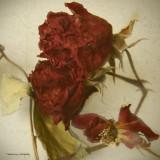Rose Blend