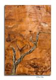 Canyon Wall Detail