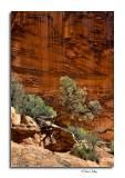 Canyon Detail