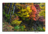Colorful Hillside, Chimney Tops Pullout