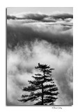 Tree Top in The Clouds