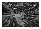 Innis Wood Metro Gardens