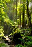 Hawaii-2011-33.jpg