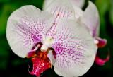 Hawaii-2011-36.jpg
