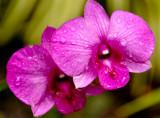 Hawaii-2011-38.jpg