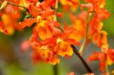 Hawaii-2011-45.jpg