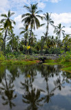 Hawaii-2011-62.jpg
