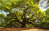 06-Angel Oak 01.jpg