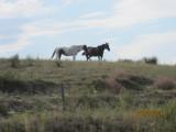 2011_North_to_Yellowstone 051.JPG