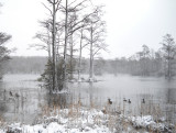 snow 055c.jpg