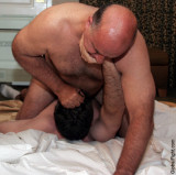 daddy bear seeks training partners wrestling matches.jpg