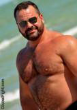 heavyset hairy chest pecs massive daddy bear.jpg
