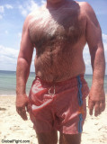 very wet hairy mans chest matted hairs.jpg