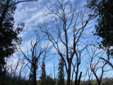 Survivors of the Kinglake bush fires