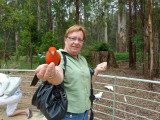 Marianne with Australian king parrot at Grants, Kallista