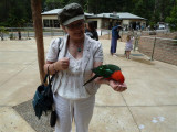 Elaine with Australian king parrot at Grants, Kallista