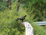 Bird of prey arena - Healesville Sanctuary