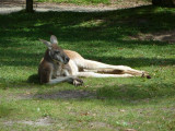 Relaxation mode - Healesville Sanctuary