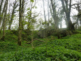 And more ramsons