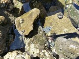 Little grey wriggly things in a rock pool