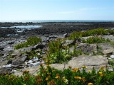 Plantlife on the causeway